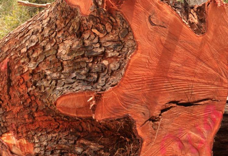 mahogany-header1